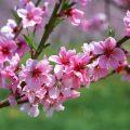 Hình nền mùa xuân