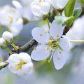 Hình nền hoa đẹp cho iPhone 6