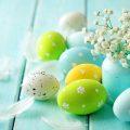 hình nền quả trứng lovely.