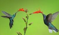 hình nền chú chim dễ thương