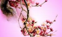 hình nền hoa đào tết đẹp nhất