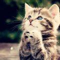 hình nền mèo con cực kỳ đáng yêu