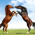 Hình ảnh đẹp nhất về những chú ngựa